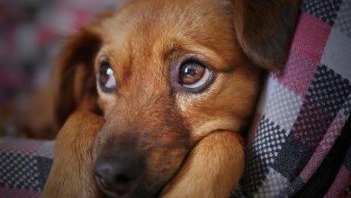 Photo of Pies wpadł do studzienki. Uratowali go strażacy z OSP w Przedborzu