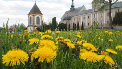 Photo of Poznaj urokliwe miejsca powiatu radomszczańskiego