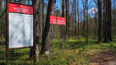 Photo of Pomysł na majówkę? Era Travel poleca wycieczkę do Rezerwatu przyrody Dębowiec
