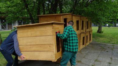 Photo of Nowe budy dla Schroniska dla Bezdomnych Zwierząt w Radomsku