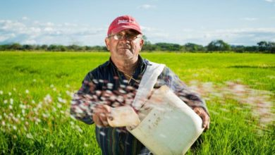 Photo of Dopłaty 2020: rolnicy złożyli już milion wniosków