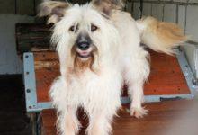 Photo of Dzisiaj Dzień Psa. Nie kupuj, adoptuj. Adopcja za złotówkę w schronisku