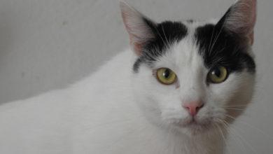 Photo of Radomszczańskie Towarzystwo Opieki nad Zwierzętami potrzebuje pomocy