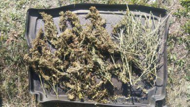 Photo of Policjanci znaleźli narkotyki w lesie
