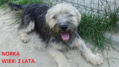 Photo of Zaadoptuj zwierzaka z radomszczańskiego schroniska