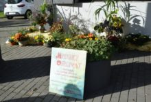 Photo of Wystawa eco-stroików. Wiązanki na cmentarz z naturalnych materiałów